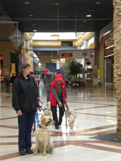 Famille d'accueil d'un chien-guide