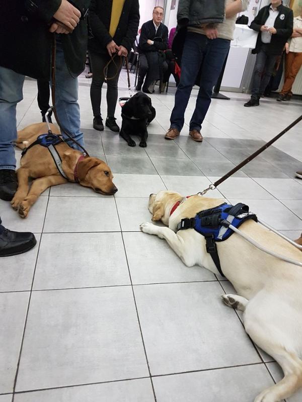 3 chiens 3
